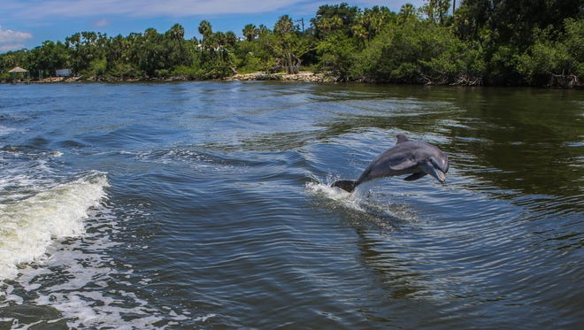 During a recent boat tour of the Indian River Lagoon with Good Natured Tours in Melbourne, a pair of dolphins surfaced next to the boat.