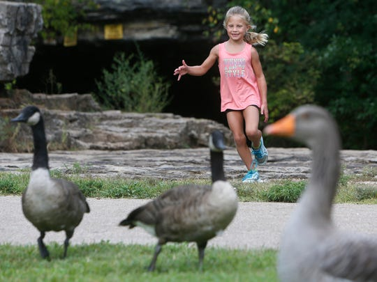 Abby Wheeler, 6, of Rogersville, runs toward the geese at Sequiota Park on Wednesday, Aug. 31, 2016.