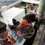 5 things to know for oyster season in the Chesapeake