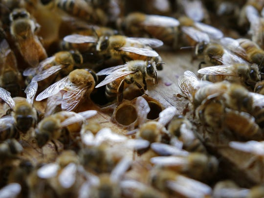 Bees are seen Friday in a hive owned by Grand Chute beekeeper Larry Cain.