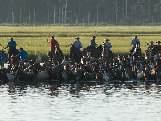 Saltwater Cowboys lead a herd of ponies into the water during the Chincoteague Pony Swim on Wednesday, July 26, 2017.