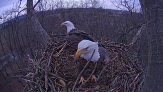 Hanover Eagle Cam