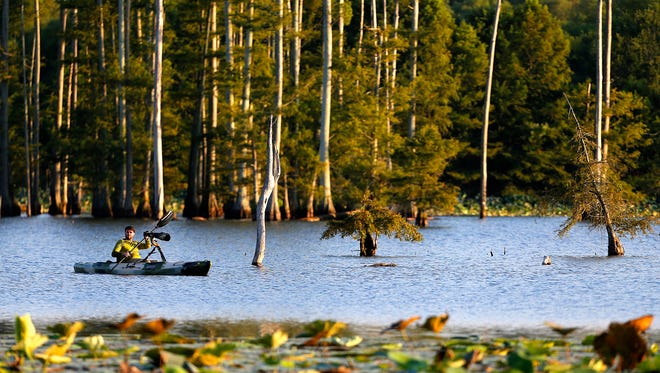 Amateur wildlife photographer Lyle Gruby paddles his kayak through the Hatchie National Wildlife Reserve near Brownsville, Tenn. The refuge is a popular stop for bird watchers and photographers, especially during the winter migration.