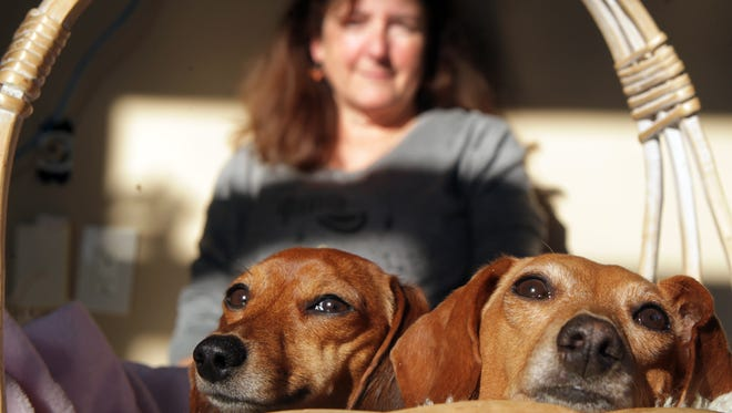 Janice Elam with her miniature dachshunds, Polly (left) and her mother Cami, who ran off Nov. 16. Cami returned four days later, and Polly was found two days after that by hunters near Big Bone Lick State Park, about five miles from Elam's home.