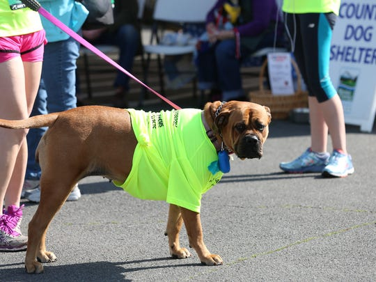 Runners and their four-legged companions participate in the annual K9 Run, hosted by Where to Start Fitness and the Stayton Police, on Saturday, April 2, 2016, in Stayton.