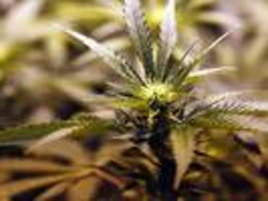 _media_2015_07_31_Cincinnati_Cincinnati_635739321840110315-cannabisleaf.jpg