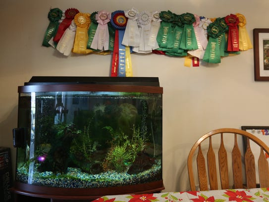 Ryan Mulhausen's fish tank is pictured inside his condominium