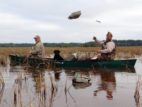 Ben Elfelt of Stacy, Minn., tosses a decoy while preparing for a duck hunt with Jim Bennett of New Richmond on opening day of the 2016 Wisconsin duck hunting season near Grantsburg. The men were joined by Bennett's dog Teal, a Labradinger.