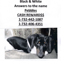 Perth Amboy family frantically searching for missing therapy dog for kids