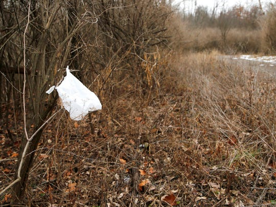 A plastic bag tied to a tree marks the location of a shack where a homeless person lives.