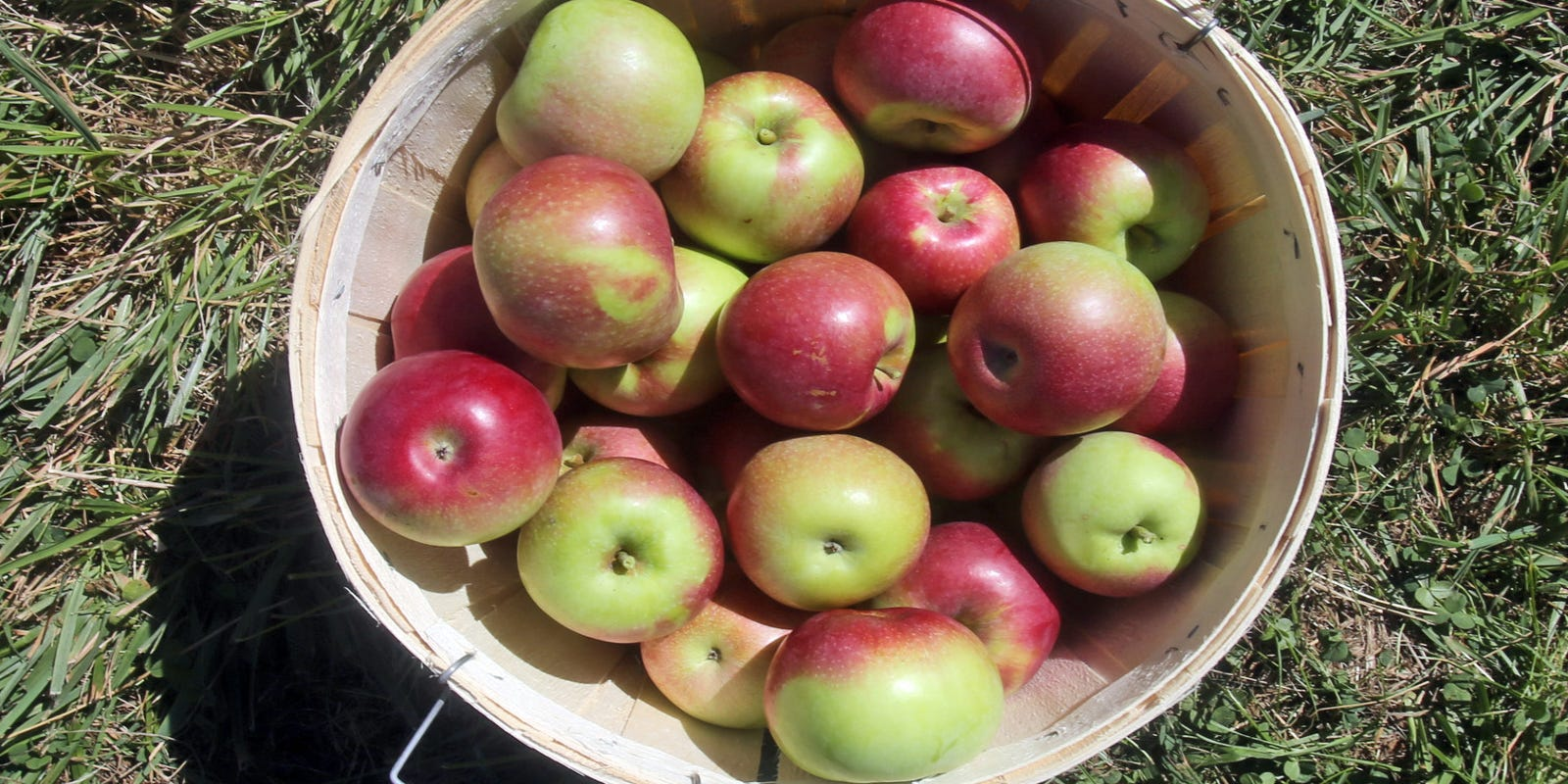 Where To Go Apple Picking