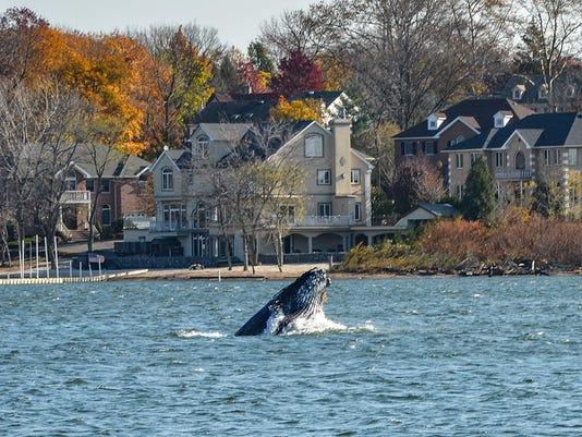 -Whale2.jpg