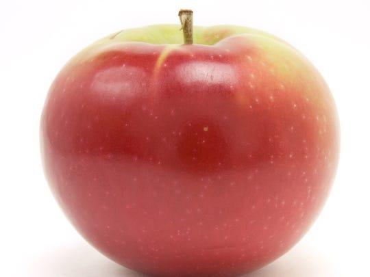 McIntosh apple
