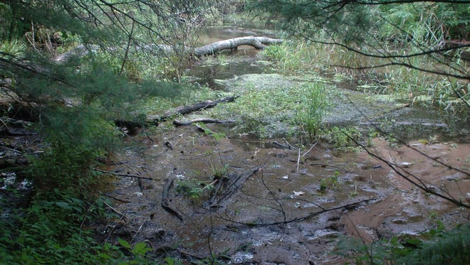 In 2014, the Little Plover River — a Class 1 trout stream near Stevens Point — fell below minimum water levels set by the Department of Natural Resources. Irrigation in the region is one reason flows dry up in the summer.