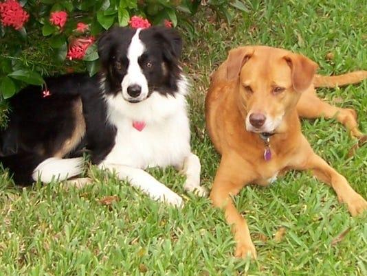 0718-ynir-ask-dog-training-jessedale.jpg
