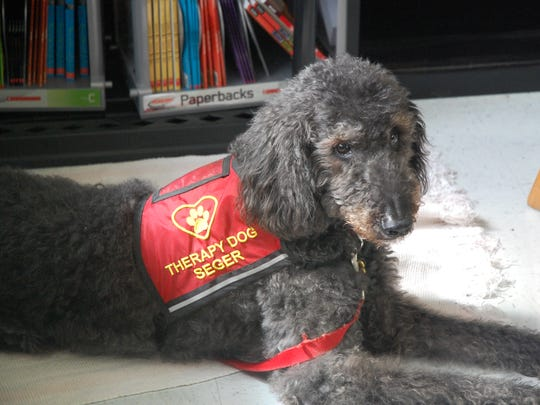 Therapy dog Seger