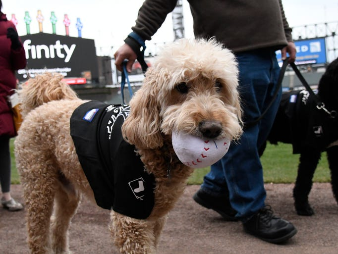 April 23: Dogs walk on the field during Dog Day at