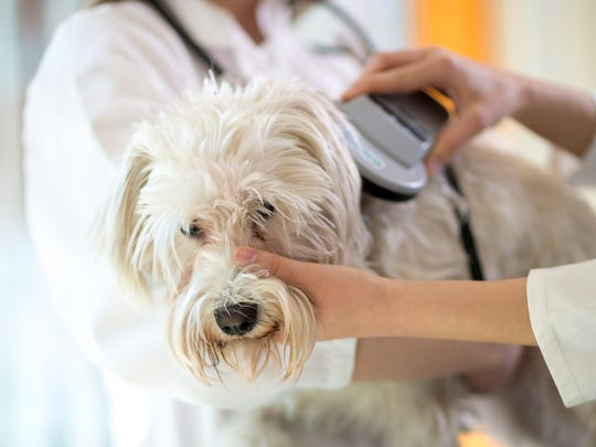 When a pet is microchipped, and that microchip is registered, their chance of being reunited with their family is increasingly higher.