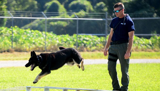 Jackson Police Officer Jeremy Stines watches as his police K-9, Pax, jumps over one of his obstacles Friday in preparation for the dog's annual certification.