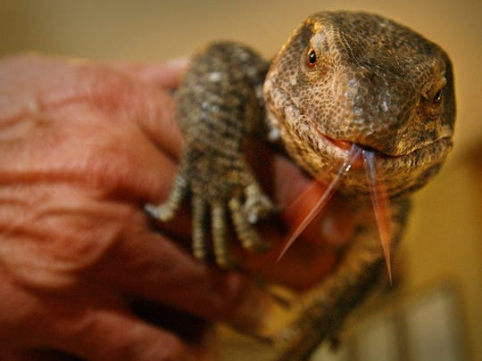 The two day Reptile and Exotic Animal Expo will be