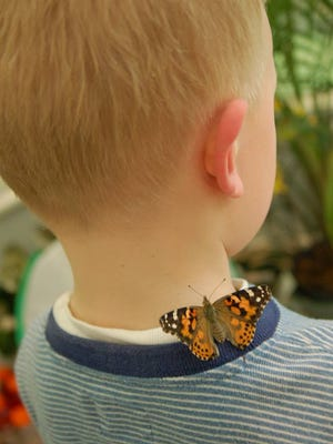 Polaris Fashion Place in Columbus will host a butterfly exhibit starting Saturday.