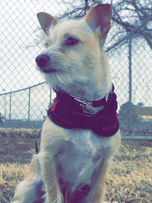 Pet Portraits: Chloe