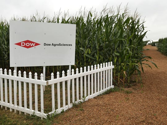 A Dow AgroSciences test plot near Sheridan gives farmers the chance to see the company's herbicide-resistant crops.