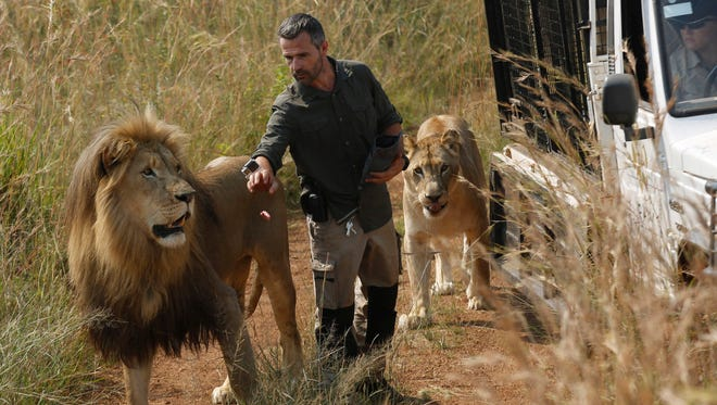 "In this March 15, 2017 file photo, Kevin Richardson, known as the ""lion whisperer,"" takes two of his lions for a walk in the Dinokeng Game Reserve, near Pretoria, South Africa."