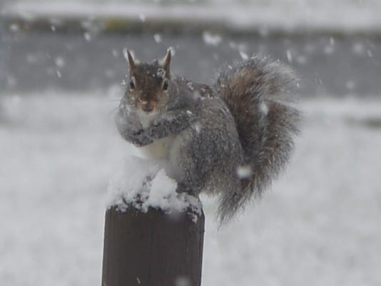 snow-squirrel.jpg