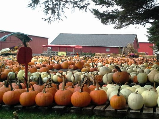 Pumpkins at Woody Acres Farm in Penfield.