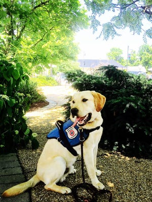 Jude, one of the diabetes alert dogs trained at DOGWORKS in Ontario, N.Y.