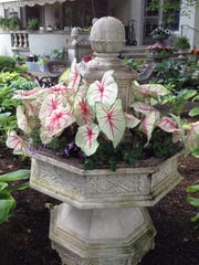 On the 2016 Indianapolis Garden Club' s Garden Walk, one shady landscape had several fountains planted with annuals, including caladiums, begonias and streptocarpella. This year' s tour will be June 7.