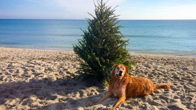 """""""Riley"""" discovers the simple pleasures of Jupiter's dog friendly beach."""