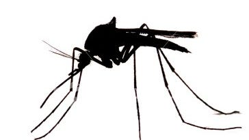 The first sign of West Nile virus in Westchester this season has been discovered in a mosquito trapped in New Rochelle, health officials said Thursday.