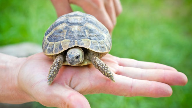 A photo of a turtle. This is not the same turtle that was rescued.