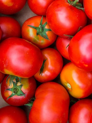Be on the lookout for tomato problems so that you can treat them appropriately and have a successful harvest.