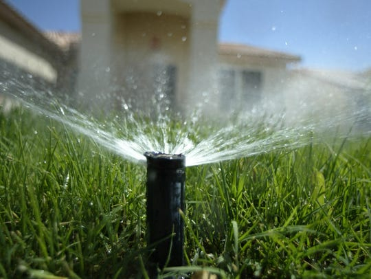 A sprinkler head pops up from the ground to water a