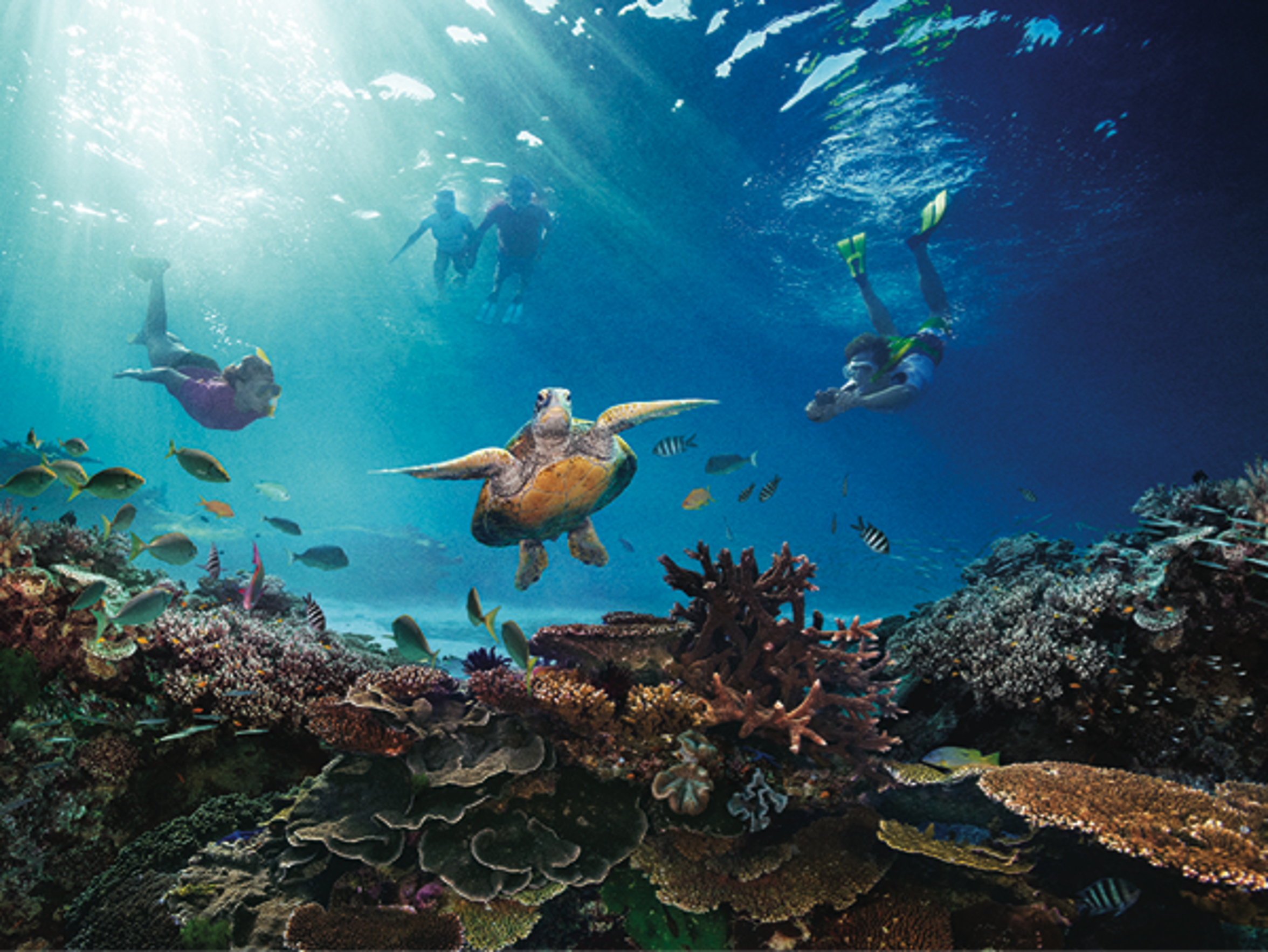 Snorkel and dive in the world's largest coral reef