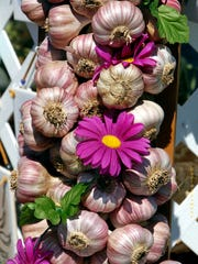 The Glorious Garlic Festival will be held August 6 and 7.