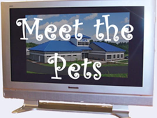 York County SPCA's Meet the Pets logo