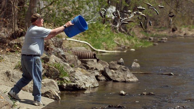 In this 2009 file photo, Ken Rose helps stock trout in Wappinger Creek in Pleasant Valley.