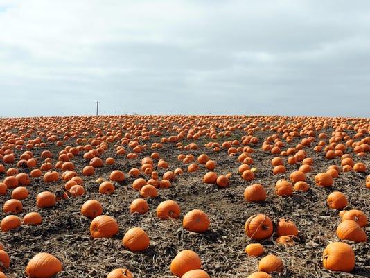 160913 jd pumpkins01.jpg
