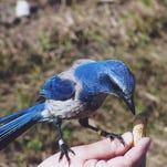 Photos: Space Coast Birding Festival