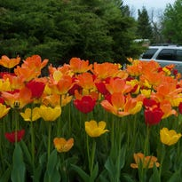 Hoosier Gardener: Don't be tempted to plant warm-season plants too early
