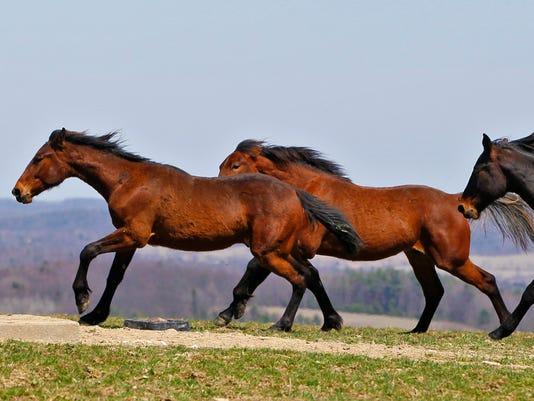 635966619764502780-horse-3.jpg