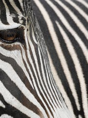 A northern Indiana sheriff says a zebra has died at a farm due to the extreme cold gripping the region.