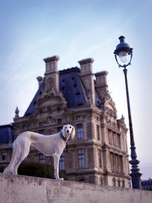 """Pet photographer Rachael Hale McKenna shows her client Heyla, a 10-year-old Saluki, photographed in Paris in front of the Louvre Museum. McKenna photographed France's dogs for her photo book, """"The French Dog."""""""