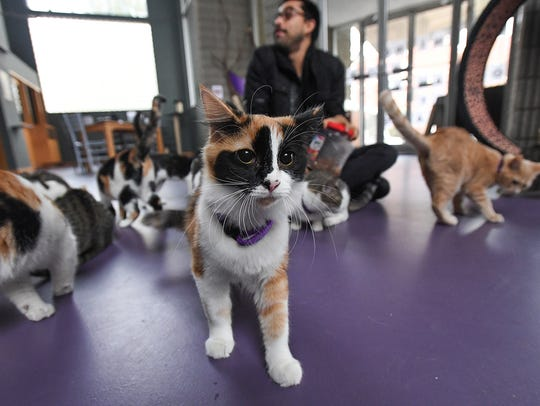 Cats at The Organic Cat Cafe in downtown Greenville