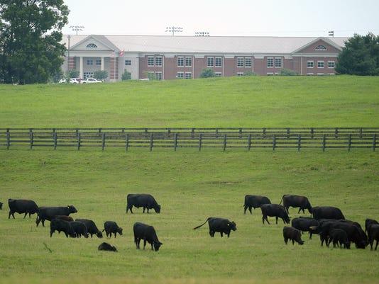 636362602642914077-springhill-cows.jpg