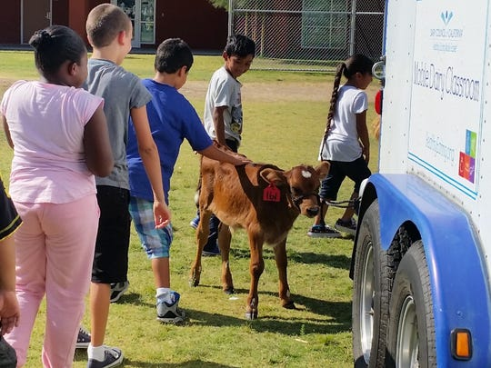 The farm comes to Palm Springs, as these students pet a calf during a Dairy Council of California Mobile Dairy Classroom visit.